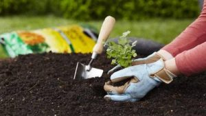 Gardening Know-How - The Most Popular Online Learning Courses During Lockdown